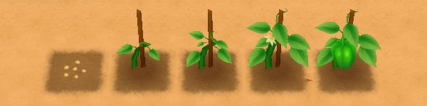 Green Pepper growth stages image