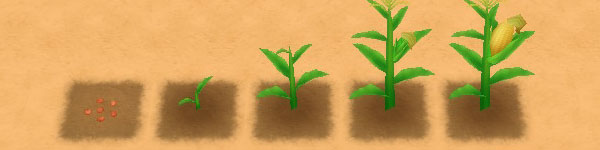 Corn growth stages image