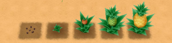 Pineapple growth stages image