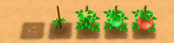 Tomato growth stages image