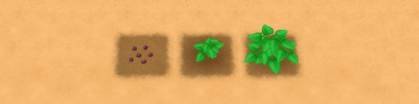 Yam growth stages image
